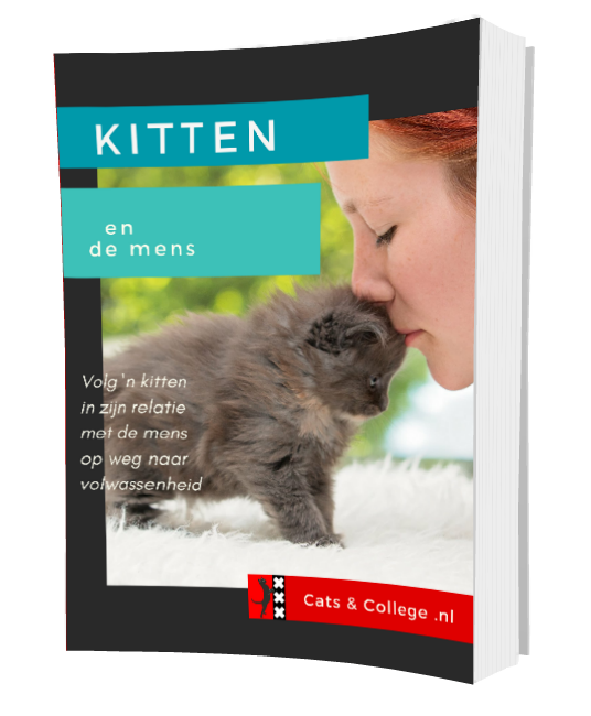 Hoe kom je aan een leuk kitten? – Cats and College